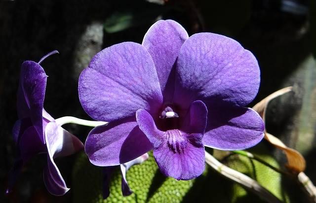 tanaman hias pembersih udara dalam ruangan dendrobium atau anggrek