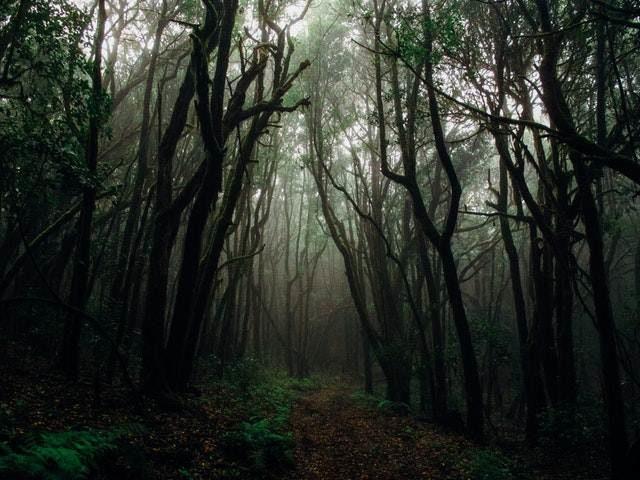11 Manfaat Hutan Bagi Kehidupan Umat Manusia