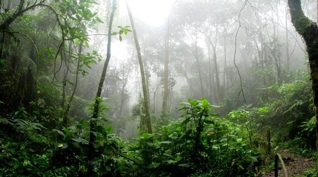 Manfaat Hutan Bagi Kehidupan Umat Manusia C