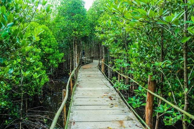 Manfaat Hutan Bagi Kehidupan Umat Manusia - hutan mangrove
