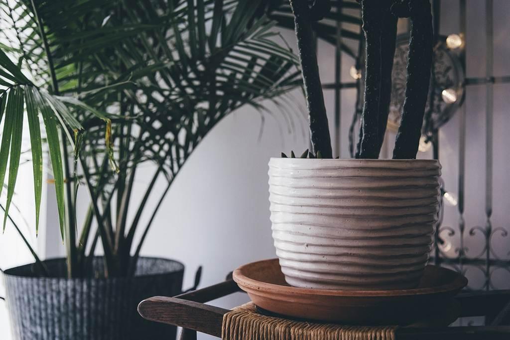 Tips Merawat Tanaman Hias Dalam Ruangan (Indoor)