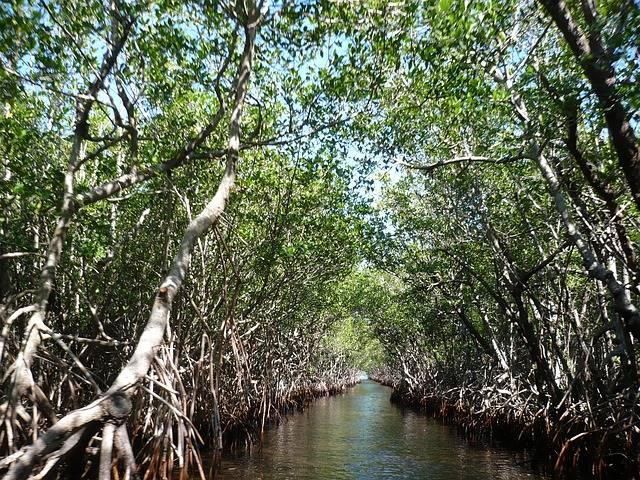 Manfaat dan fungsi hutan mangrove